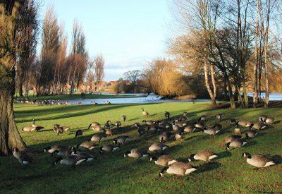 british.parks