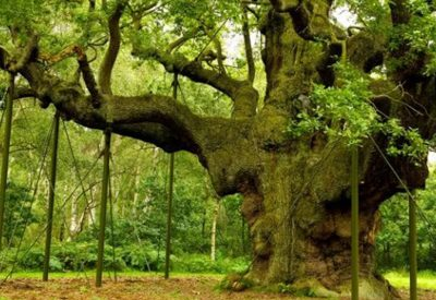 treefbplain