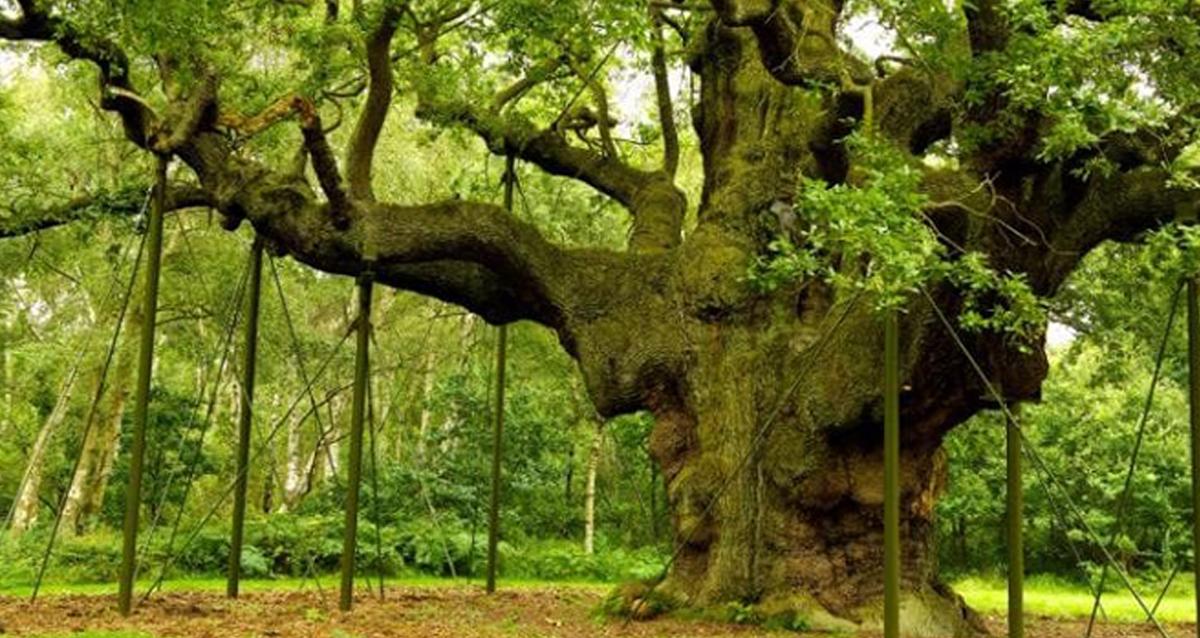 Sherwood Forest Horn
