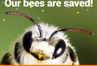 our-bees-are-saved
