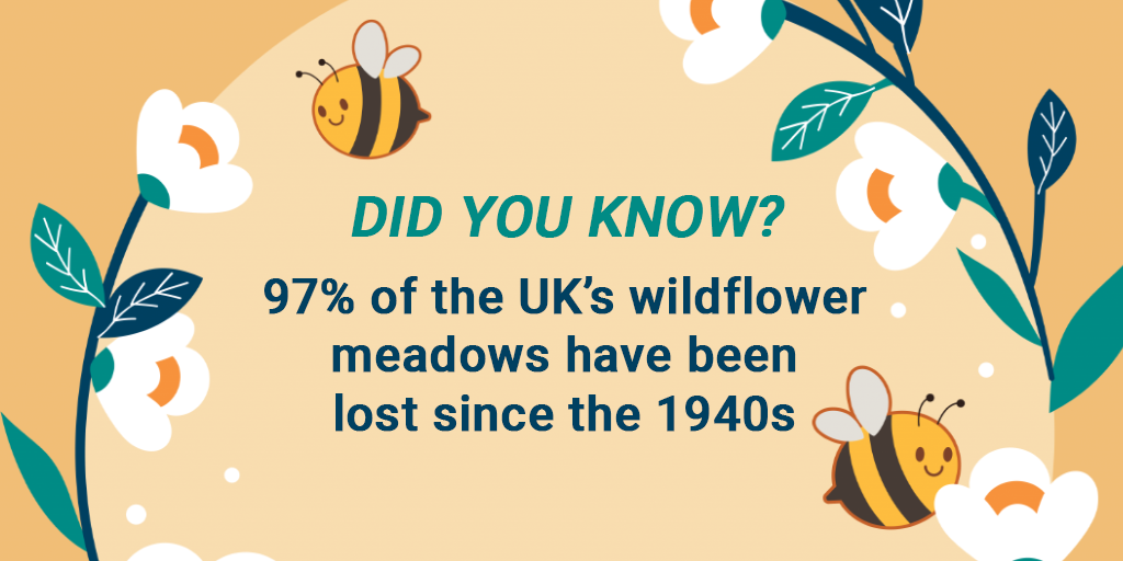 DID YOU KNOW? A quarter of all known bee species haven't been recorded since the 1990s