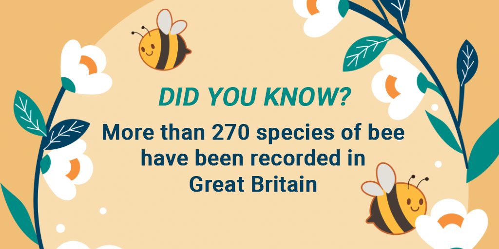 DID YOU KNOW? More than 270 species of bee have been recorded in Great Britain