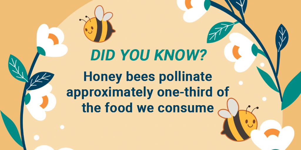 DID YOU KNOW? Honey bees pollinate approximately one-third of the food we consume