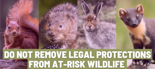 """Image shows a read squirrel, a water vole, a mountain hare and a pine marten. Text on the image says """"do not remove legal protections from at-risk wildlife"""""""